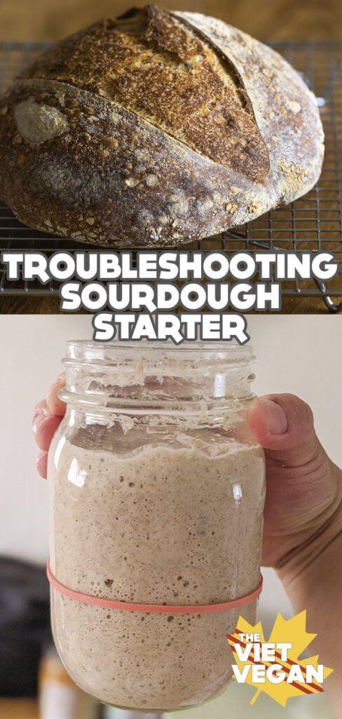 Troubleshooting Sourdough Starter